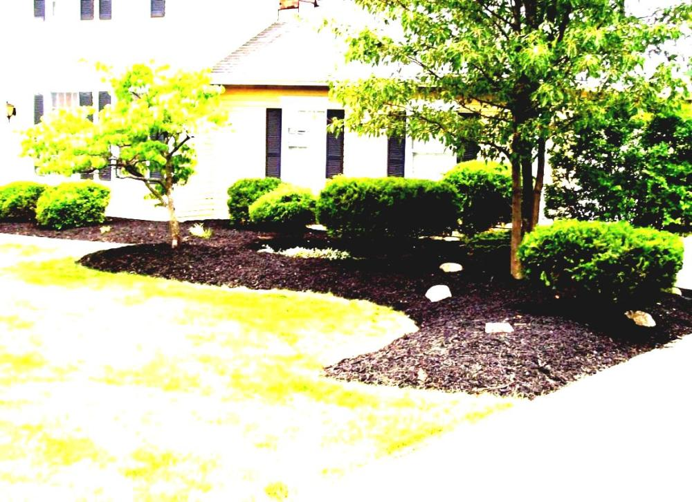Cheap Landscape Ideas For Front Yard
